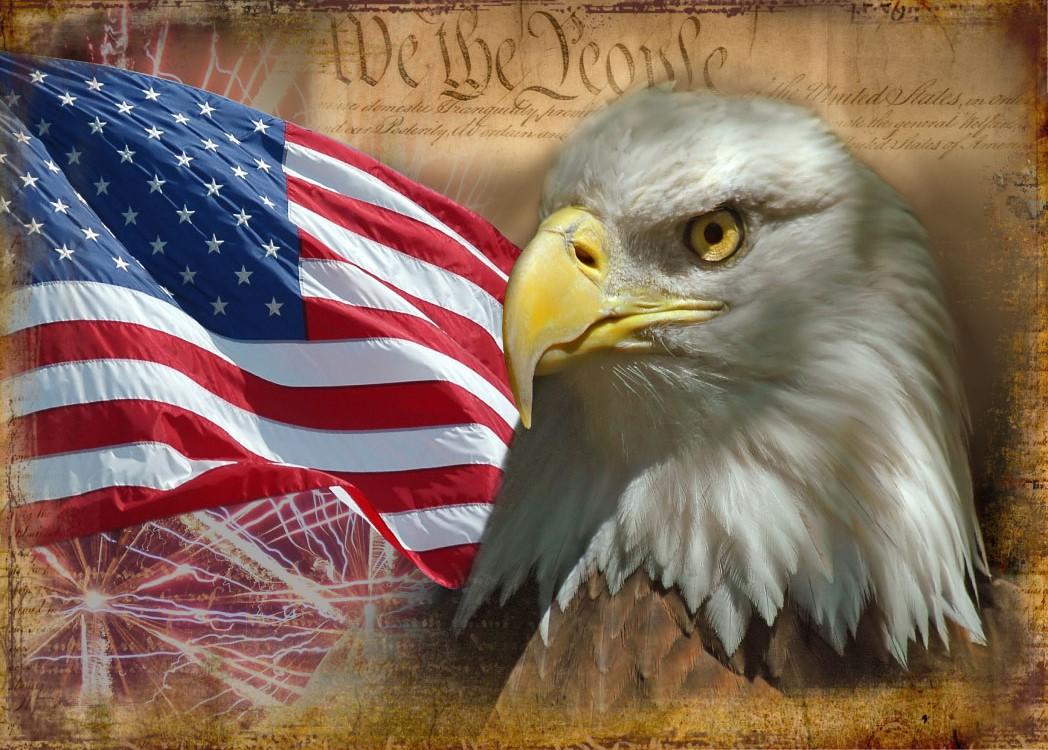 eagle back of card.jpg - 268.17 Kb
